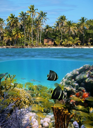 Beach and underwater view with a colorful coral reef, shoal of tropical fish, coconut palm trees and a hut photo
