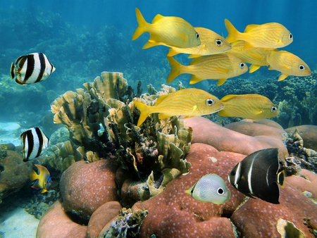 Seafloor in the Caribbean sea with school of colorful tropical fish photo