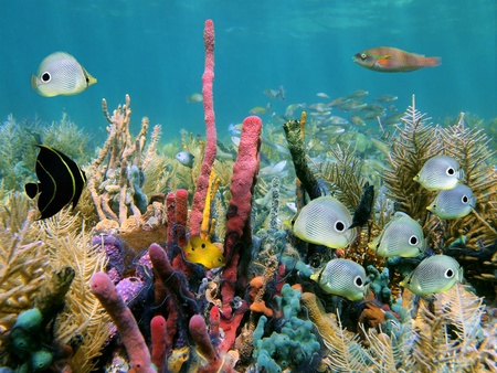 seabed: Barriera corallina con spugne di mare colorate e pesci tropicali