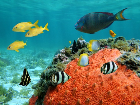 Underwater view in a lagoon with colorful tropical fish and sea sponge photo
