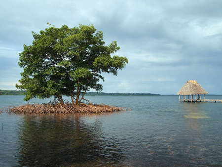 thatched: Small mangrove island with thatched roof hut