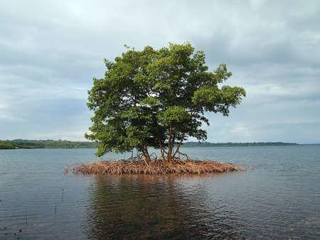 mangrove: Small mangrove island in the Caribbean Stock Photo