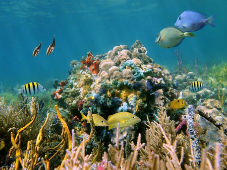 A tropical reef and its inhabitants, coral, fish, squid and sea sponges photo