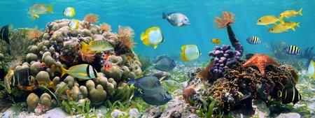 corales marinos: Panorama bajo el agua en un arrecife de coral con vida marina colorida