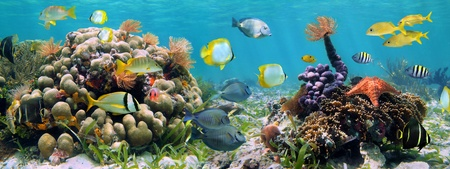 Underwater panorama in a coral reef with colorful sealife photo