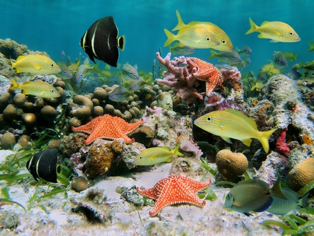Sea life in a coral reef with school of tropical fish and starfish