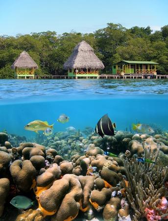 sealife: Unterwasser-und Oberfl�chen-Ansicht mit Kabinen �ber das Meer und einem Korallenriff mit tropischen Fischen, Karibik, Bocas del Toro, Panama