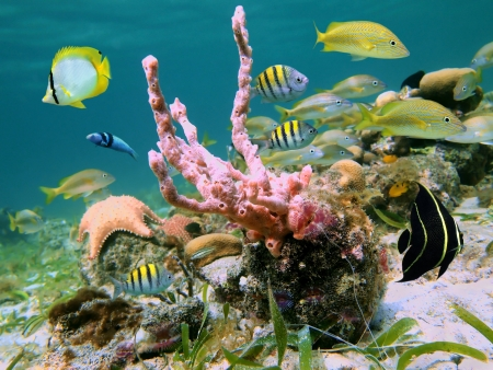 Underwater scene with marine life of the Caribbean sea photo