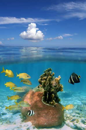 Underwater and surface view with beautiful hard coral and tropical fish photo