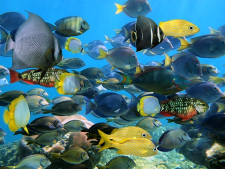 School of colorful tropical fish with coral in background Stock Photo
