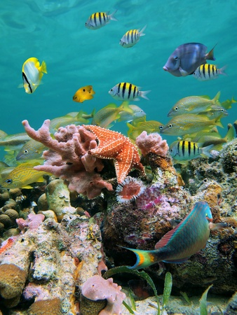 Sea-life in a coral reef with school of tropical fish and starfish Stock Photo