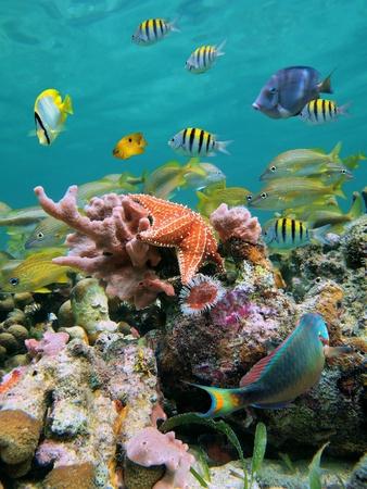 fondali marini: Sea-vita in una barriera corallina con la scuola di pesci tropicali e stelle marine