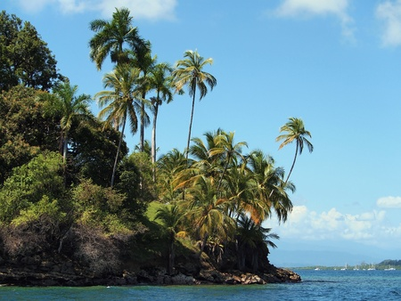 Tropical island with beautiful palm trees photo