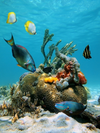 bottom of sea: Beautiful sea-life of the Caribbean sea with water surface in background