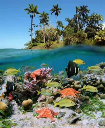 Underwater and surface view in the tropics with sea life in a coral reef and luxuriant vegetation on an island photo