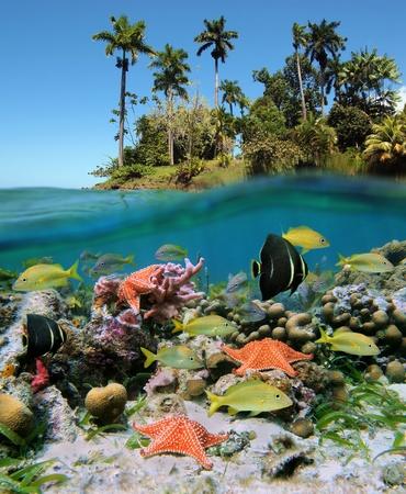 lussureggiante: Vista subacquea e di superficie ai tropici con la vita in mare, una barriera corallina e lussureggiante vegetazione su un'isola
