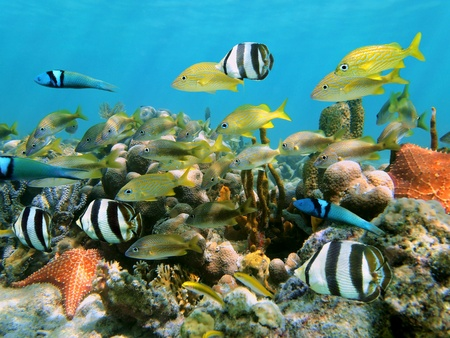 School of colorful tropical fish with coral and starfish in the background