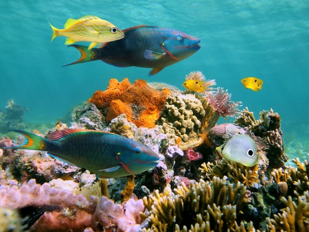 Multicolored sealife in the Caribbean sea with corals, fish, sea worms and water surface in the background