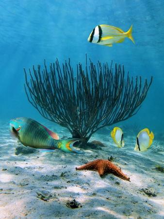estrella de mar: Escena bajo el agua con peces de colores, estrellas de mar y un abanico de mar bella Foto de archivo