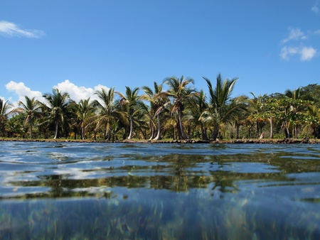 Tropical shore with coconut trees photo