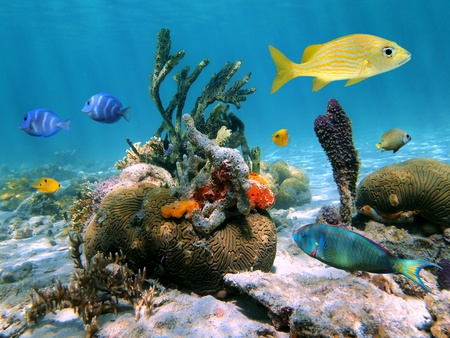 Beautiful sea-life in the Caribbean sea with corals, colorful sea sponges and tropical fish
