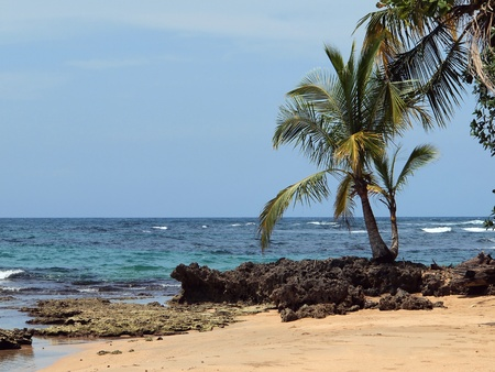 Coconut tree on a beach with rocks and blue water photo
