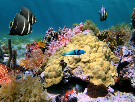 Underwater view in a colorful coral reef with fishes, sea-sponges and sea-worms