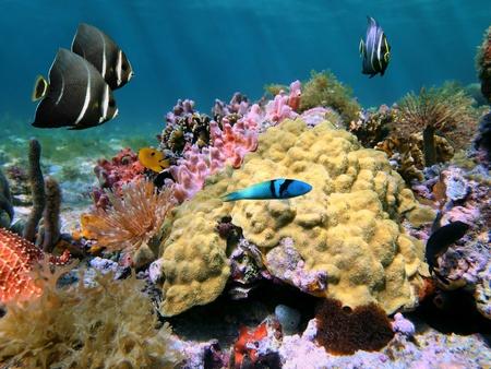 fondali marini: Vista subacquea in una scogliera di corallo colorato con pesci, spugne di mare e mare-worm