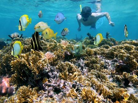 nurkować: Snorkeler nad rafÄ… koralowÄ… ze szkoÅ'y tropikalnych ryb przed nim