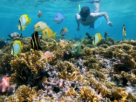 Snorkeler over a coral reef with school of tropical fish in front of him
