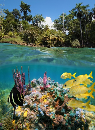 Underwater and surface view with colorful sea-life in a coral reef and lush vegetation photo