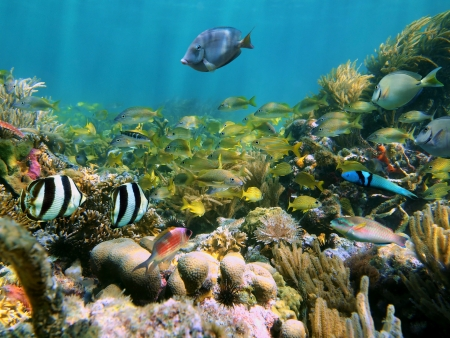 seabed: Coral reef with school of colorful tropical fish