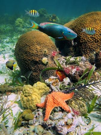 fondali marini: Coralli duri con variopinti pesci tropicali e una stella marina Archivio Fotografico