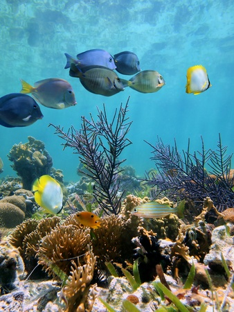 cancun: Coral garden with colorful tropical fish and water surface mirror in background Stock Photo