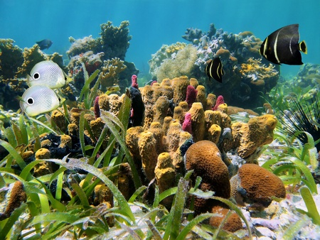 Seabed with tropical fish, coral and tube-sponges Stock Photo