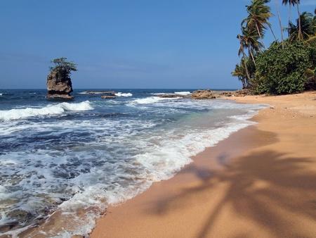 모래에 코코넛 나무의 그늘과 야생 해변