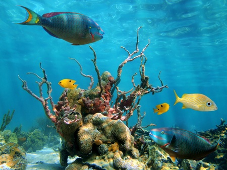 bottom of sea: Underwater view with strange forms of sea-life, colorful fish and water surface in background