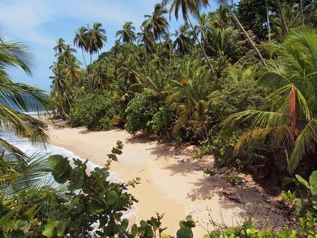 lussureggiante: Spiaggia di sabbia bianca, all'ombra della vegetazione lussureggiante Archivio Fotografico