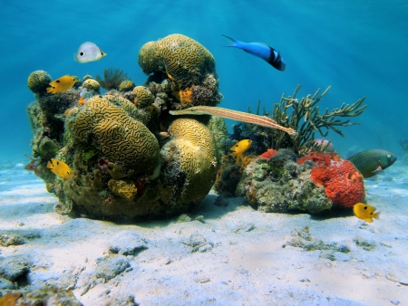 Underwater scene in the Caribbean sea with brain coral and tropical fish photo