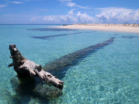 dominican republic: Driftwood in clear water near a sandy beach