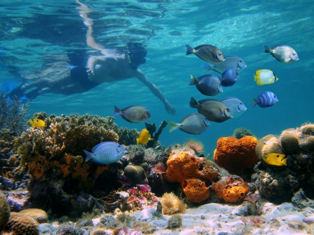 Snorkeler over a coral reef with school of tropical fish in front of him Stock Photo - 14178145