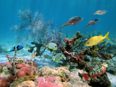 Sealife in a coral reef with tropical fish and squids
