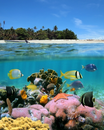 seabed: Underwater and surface view with an unspoilt beach and a coral reef with tropical fish Stock Photo