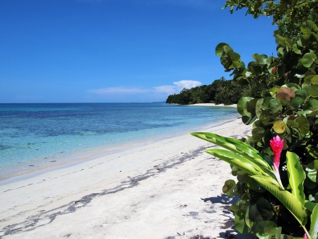 panama: Tropical white sand beach with clear water  and lush vegetation Stock Photo
