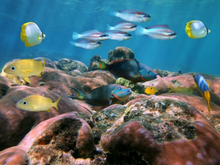 Coral reef with school of colorful fish on the Shores of the Caribbean sea photo