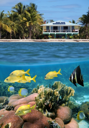 Underwater and surface view with a beach house and its coral garden