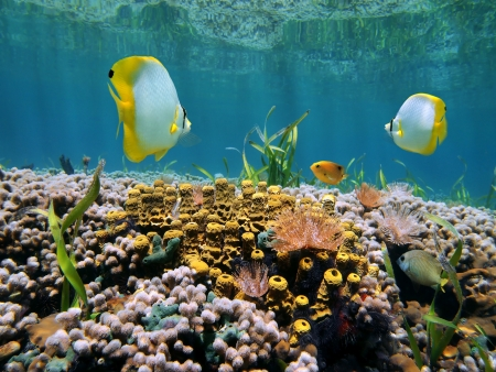 Coral garden with tropical fish below the mirror surface of a Caribbean lagoon Stock Photo - 14381623