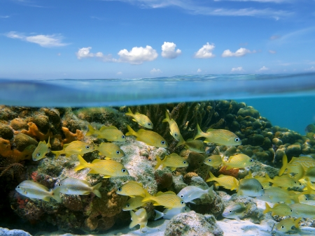Underwater and surface view with a shoal of tropical fish in a coral reef and a blue sky with small clouds photo