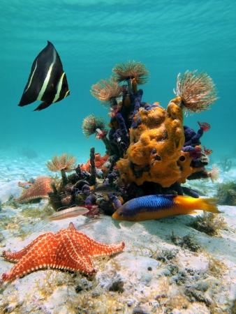 cushion sea star: Shallow seabed in the Caribbean sea with tube worms, starfish,colorful sponges and  fish Stock Photo