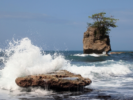 mare agitato: Onda schiantarsi sulle rocce con un albero in cima ad uno di essi
